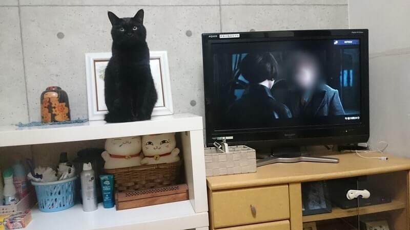 人形(置物)のように座っている実家の黒猫カイくん