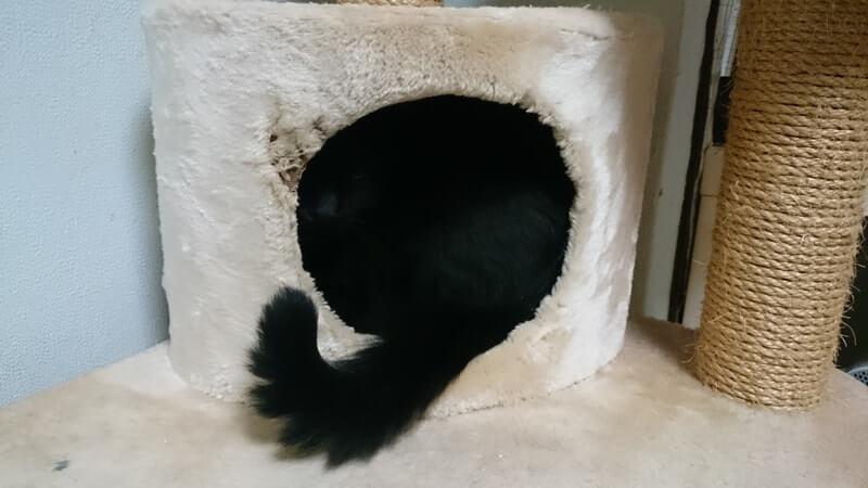 キャットタワーに頭を突っ込んでいる実家の黒猫カイくん