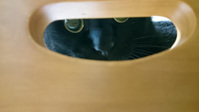 椅子の穴から覗く実家の黒猫カイくん