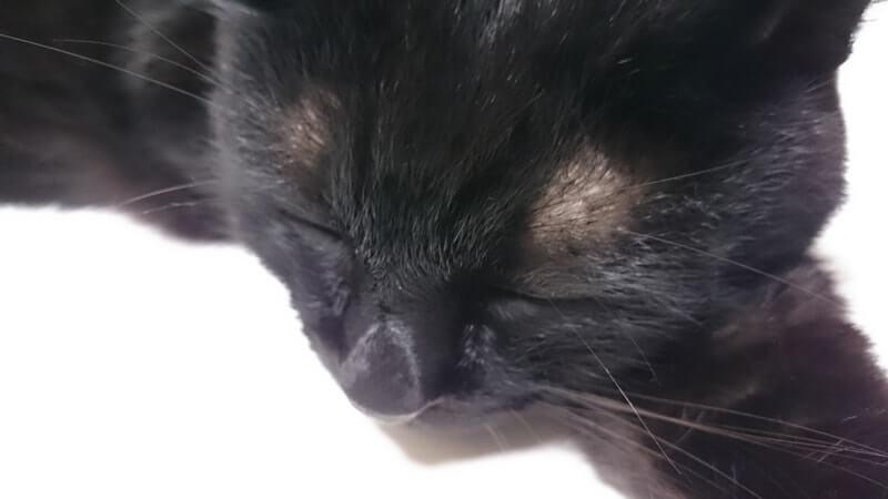 テーブルの上で気持ち良さそうに寝ている実家の黒猫カイくん