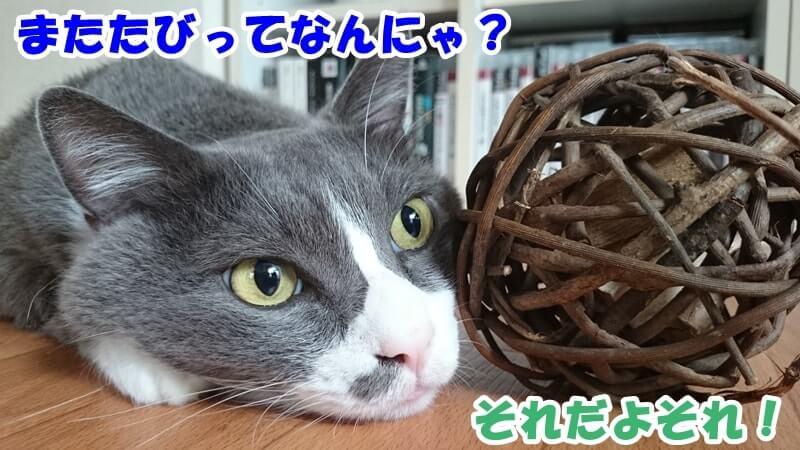 マタタビボールに顔を寄せる愛猫
