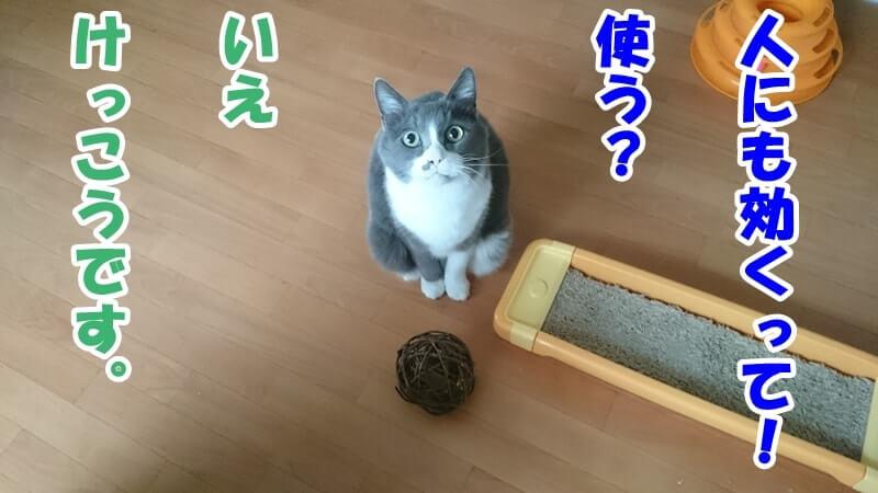 マタタビボールを提供する愛猫