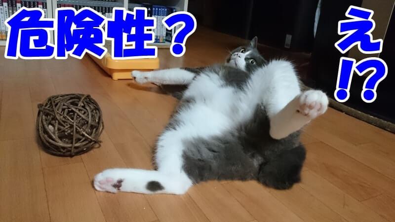 マタタビボールの横でへそ天する愛猫