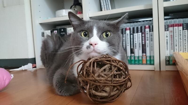 マタタビボールに顎を置く愛猫