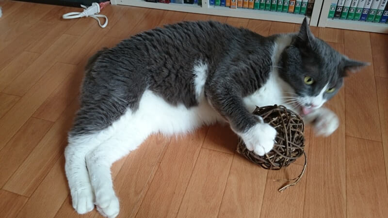 マタタビボールで遊ぶ愛猫モコ