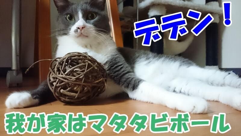 マタタビボールを牛耳る愛猫