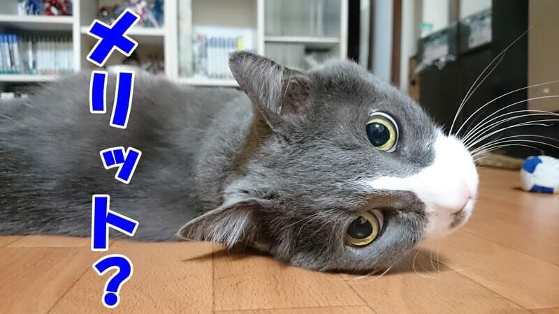 食器の位置を高くするメリットを尋ねる体の愛猫モコ