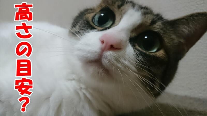 ご飯を食べやすい高さの目安を聞く体の愛猫ミミ