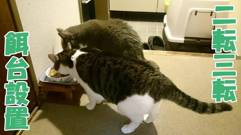 餌台設置のタイトル画像(餌台で食事する猫たち)