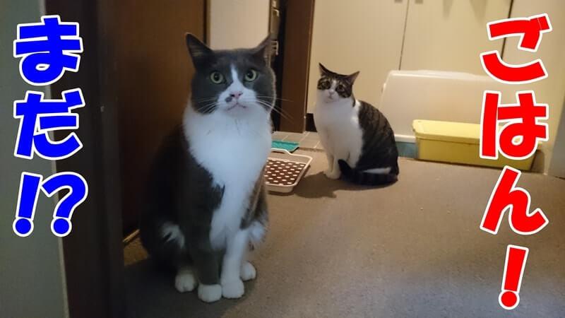 ご飯を待つ愛猫たち
