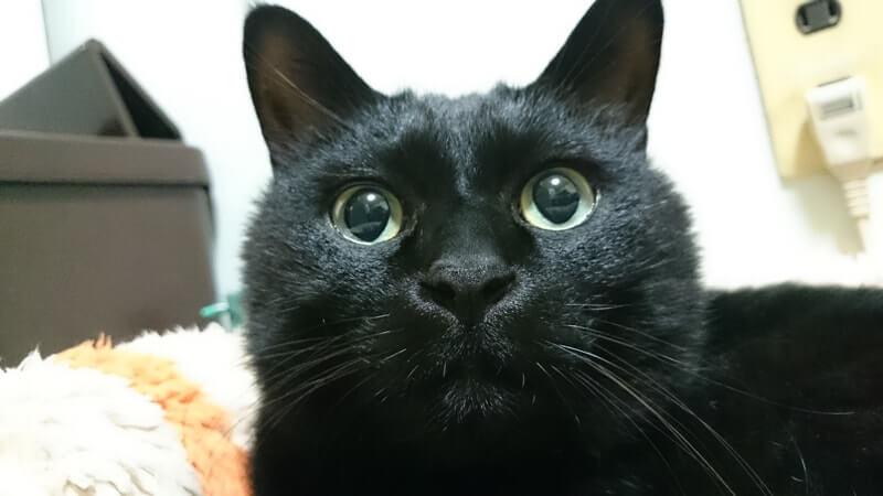 面白い顔してる黒猫カイくん