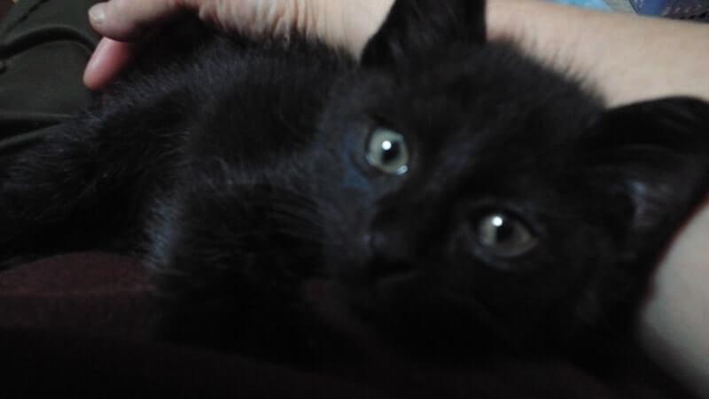 横になる子猫時代の黒猫カイくん