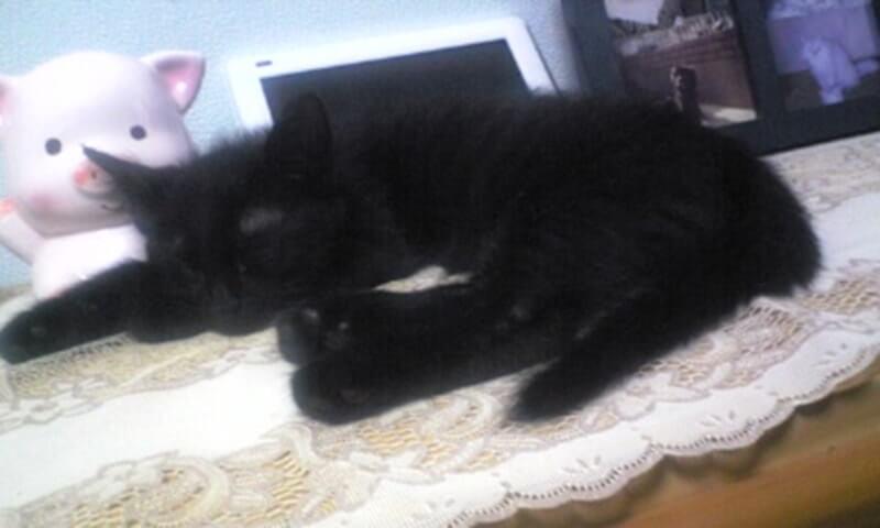 寝る子猫時代の黒猫カイくん