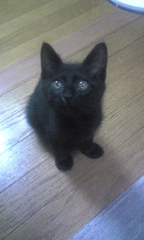 座る子猫時代の黒猫カイくん