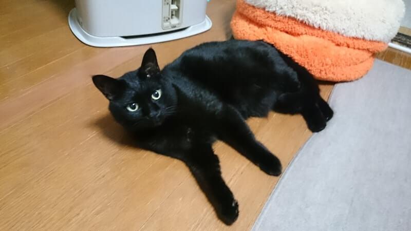 ストーブ前で横になる黒猫カイくん