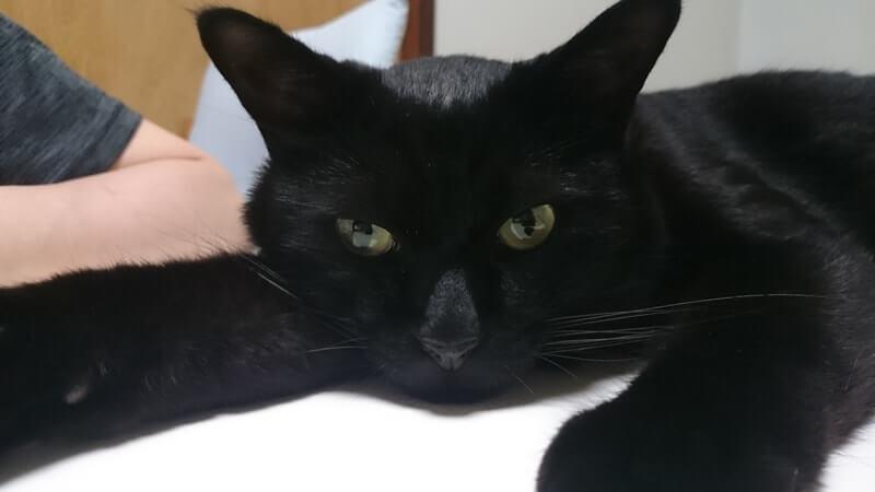 テーブルで横になる黒猫カイくん