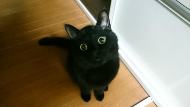 座って目を丸くし首を傾ける黒猫カイくん