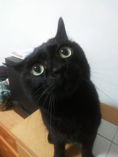 座って首を傾げる黒猫カイくん