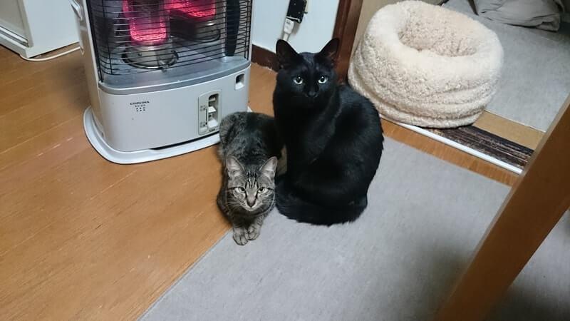 ストーブで暖を取る黒猫カイくんとキジトラのココちゃん