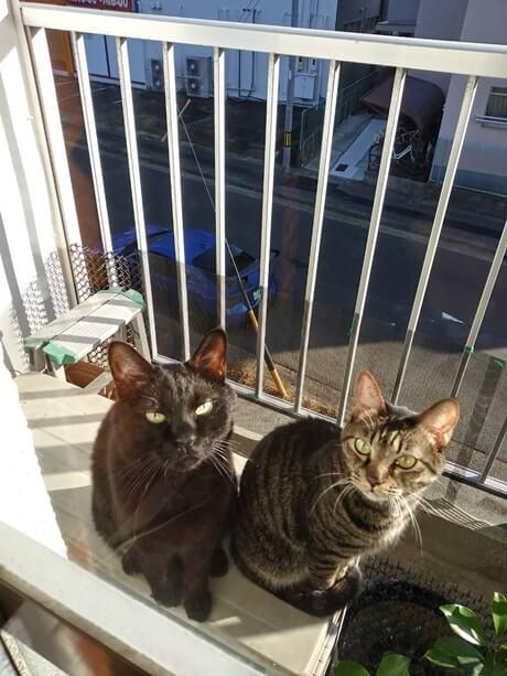 ベランダの黒猫カイくんとキジトラのココちゃん