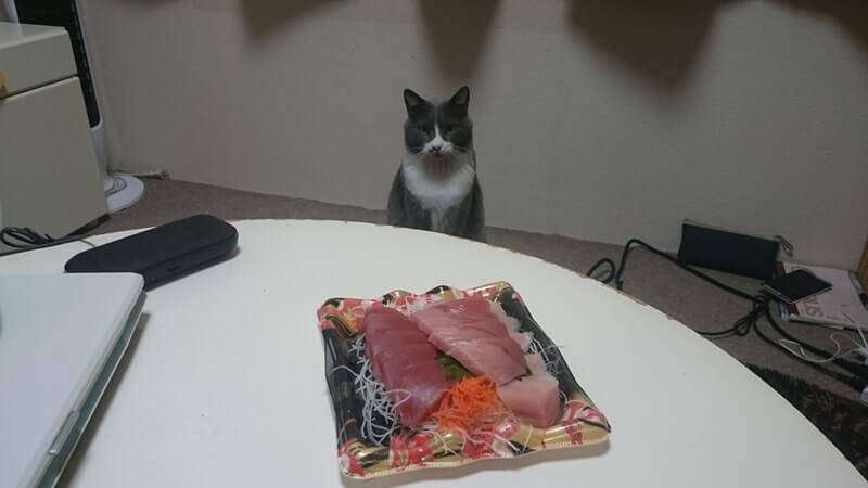 お刺身を見つめる愛猫モコ