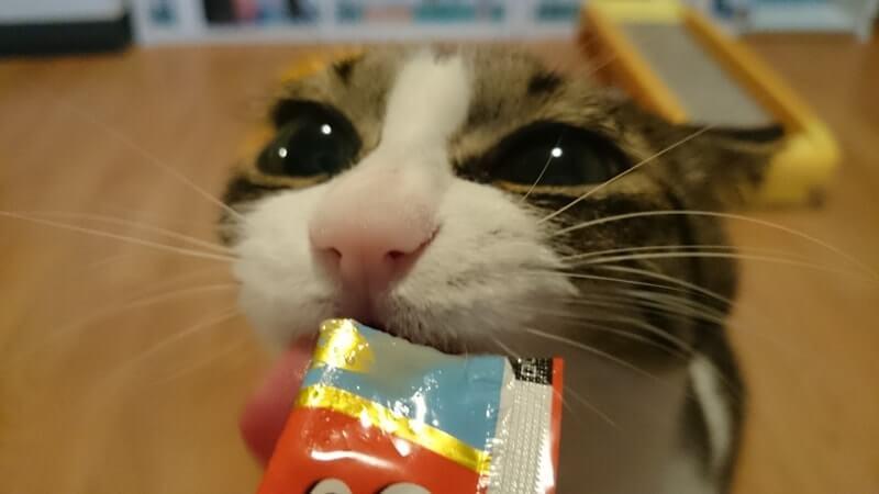 ちゅーるを舐める愛猫ミミ