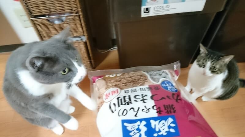 かつお節ふりかけのパッケージの匂いを嗅ぐ愛猫モコとそれを見ている愛猫ミミ