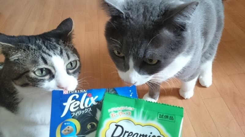 愛猫たちとスナック系おやつ
