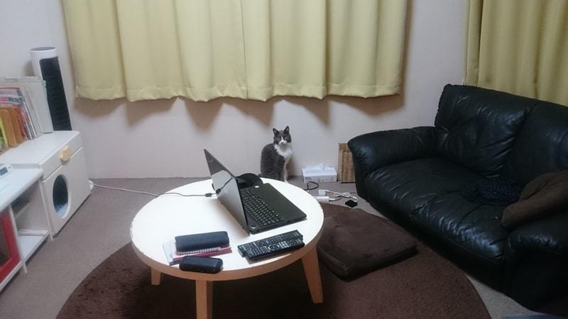 マグロの刺身を待っている愛猫モコ