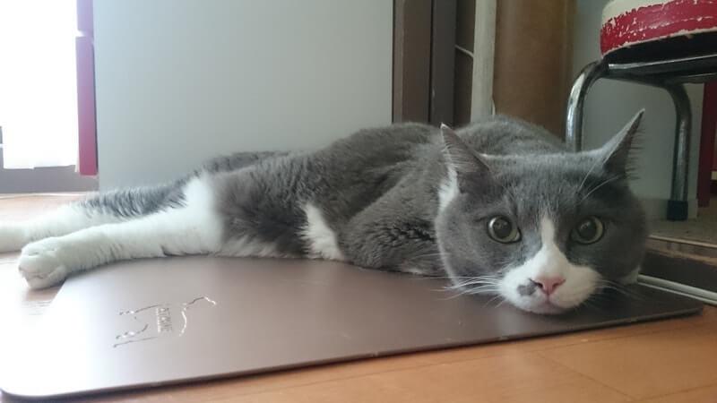 胃薬が効いたのか嘔吐しなくなった愛猫モコ