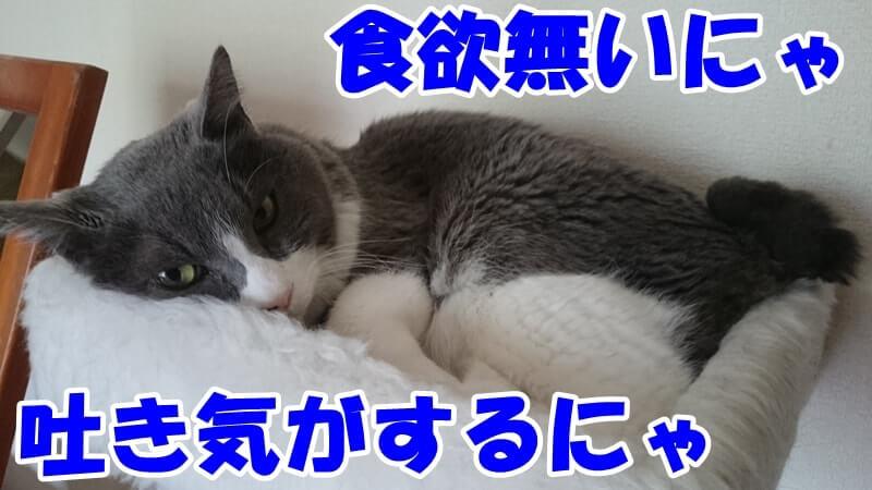 嘔吐を繰り返し食欲不振となった愛猫モコ