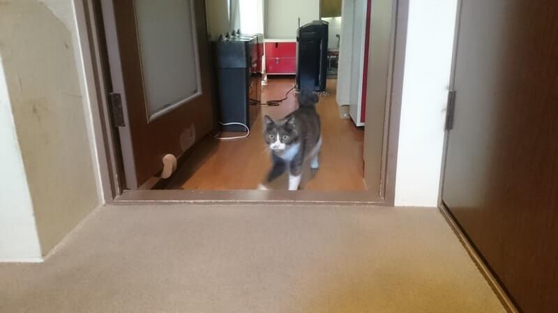 やっとお出迎えに出て来てくれた愛猫モコ
