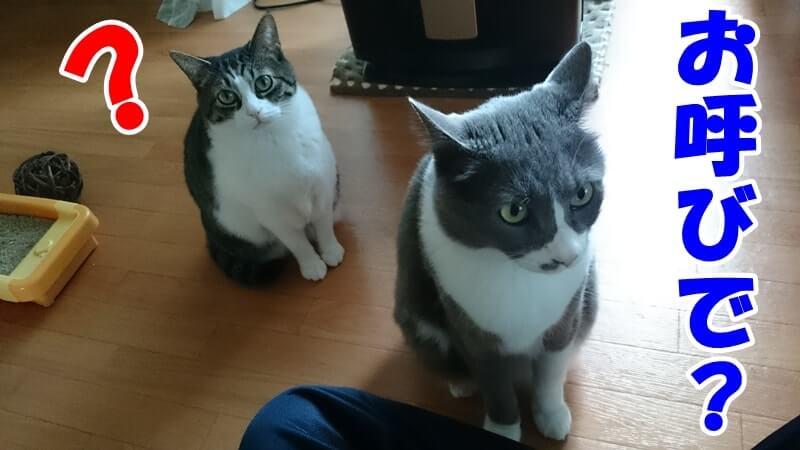 飼い主による呼びかけで集まって来た愛猫たち