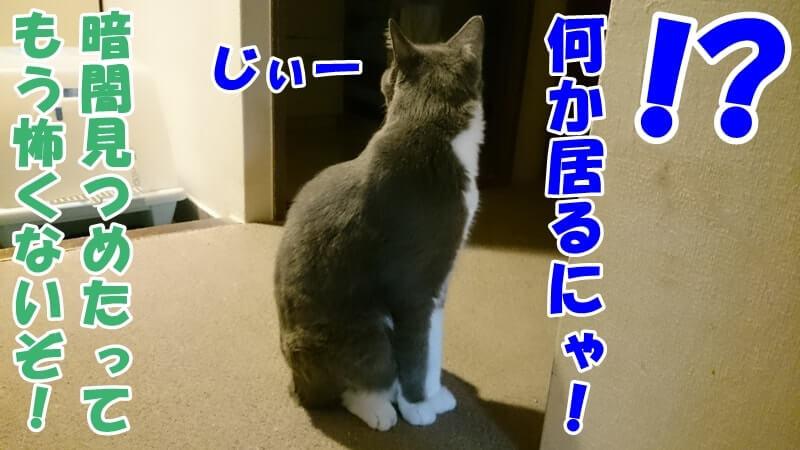 何も無い暗闇の方をじっと見ている愛猫モコ