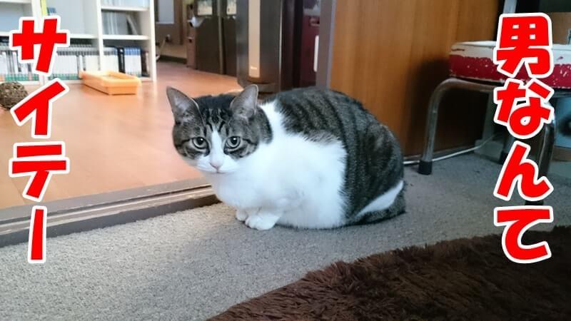 男が苦手な体で身構える愛猫ミミ