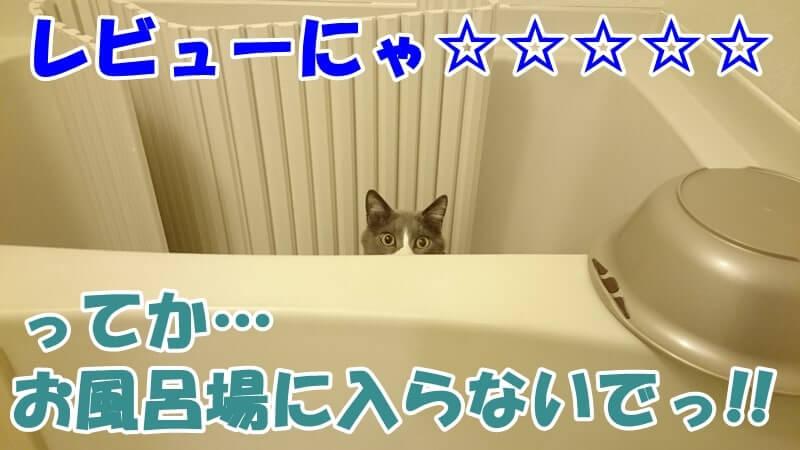 入って欲しくないお風呂場に侵入している愛猫モコ