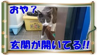 玄関が開いていることに気付いて脱走しようとする愛猫モコ(巻物Ver.)