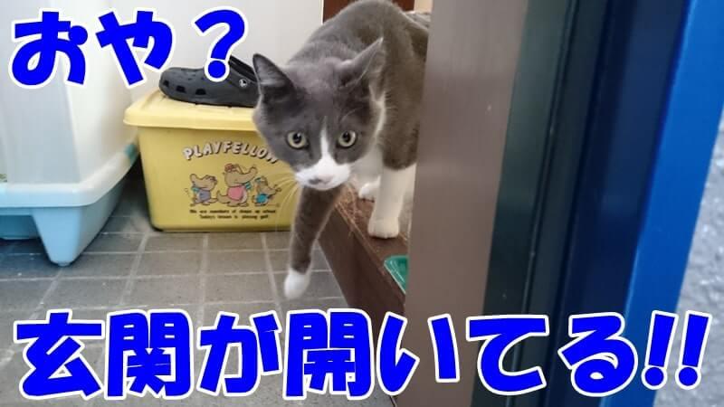 玄関が開いていることに気付いて脱走しようとする愛猫モコ
