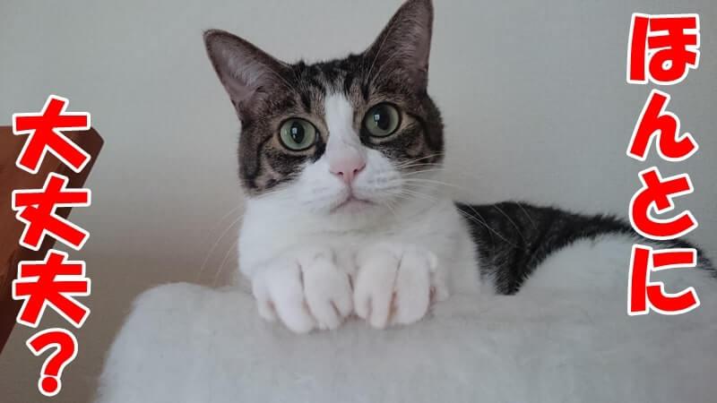 ほんとに大丈夫なのかと疑う体の愛猫ミミ