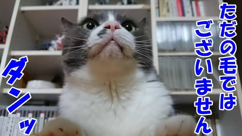 ひげはたたの毛ではないと力強く語っている体の愛猫モコ