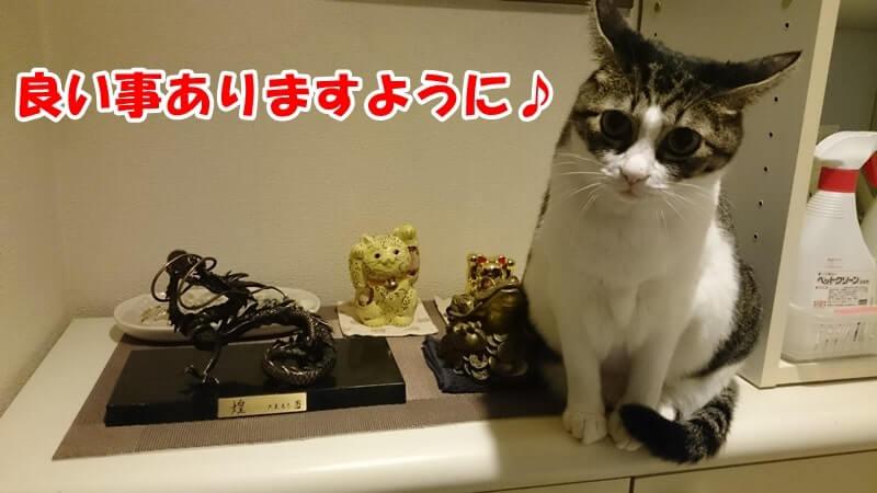 玄関に置いている縁起物と愛猫ミミ