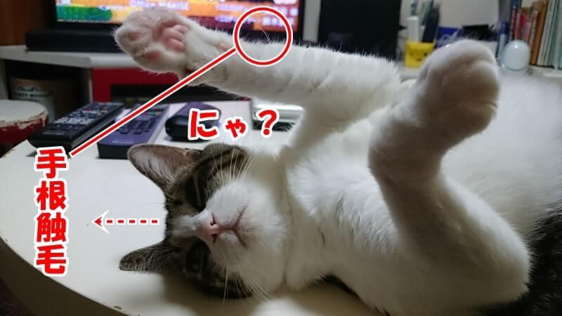 手に生えているひげを愛猫ミミの写真で紹介