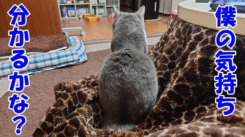 背を向けて気持ちが分かるかと問うている体の愛猫モコ