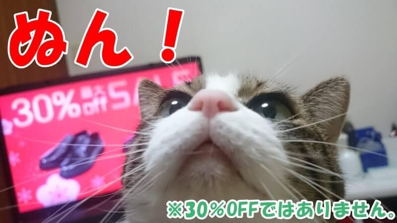 顔面どアップの愛猫ミミ