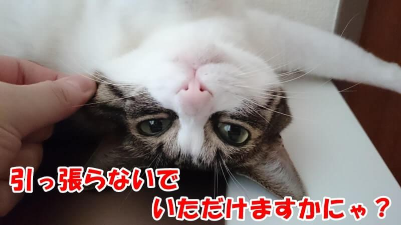ひげではなくほっぺたを引っ張られている愛猫ミミ