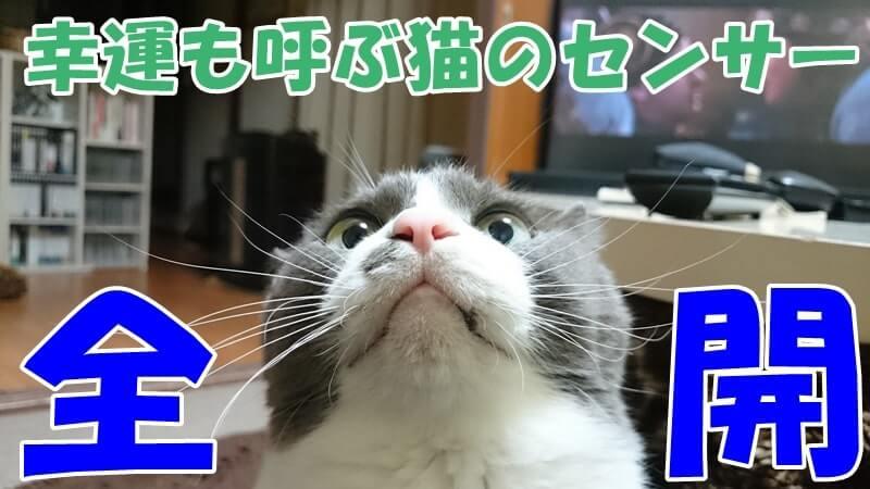 ヒゲを全開にしている愛猫モコ