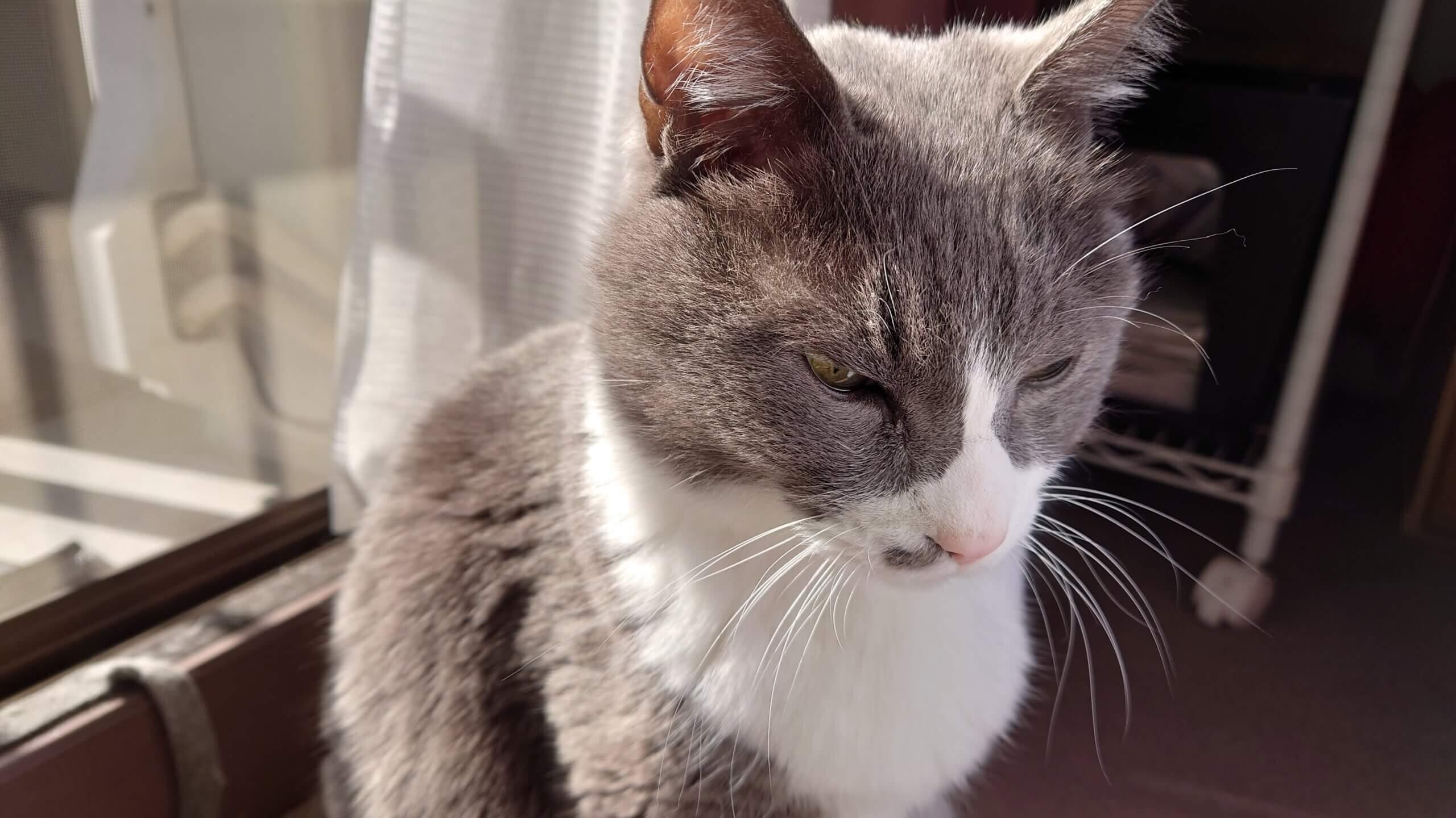 ひげが下に垂れている愛猫モコ